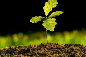 Small,Oak,Plant,In,The,Garden.,Tree,Oak,Planted,In
