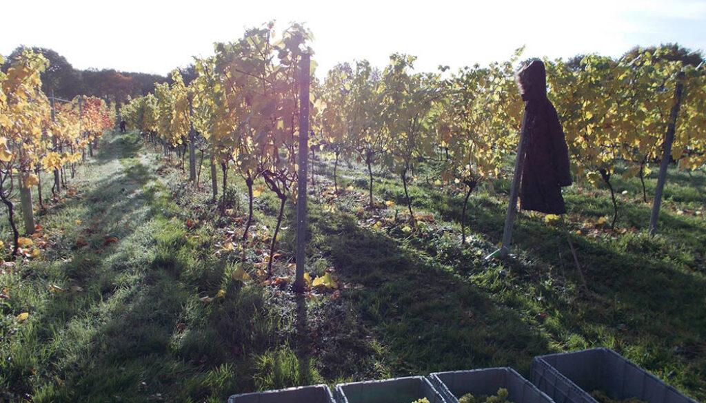 Maud Heath Vineyard Produce Star Wine Tytherton