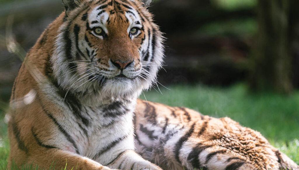 Copyright: Marwell Wildlife, Jason Brown @Marwell Wildlife www.marwell.org.uk